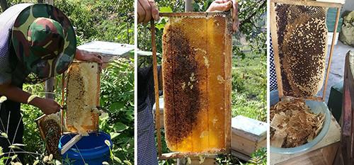 沂蒙山这个生产中华蜜蜂蜂蜜的合作社 今年首期采蜜300余斤